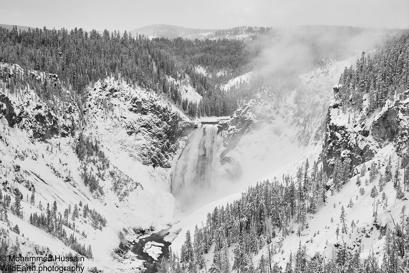 Lower Yellowstone Falls -Yellowstone National Park, WY
