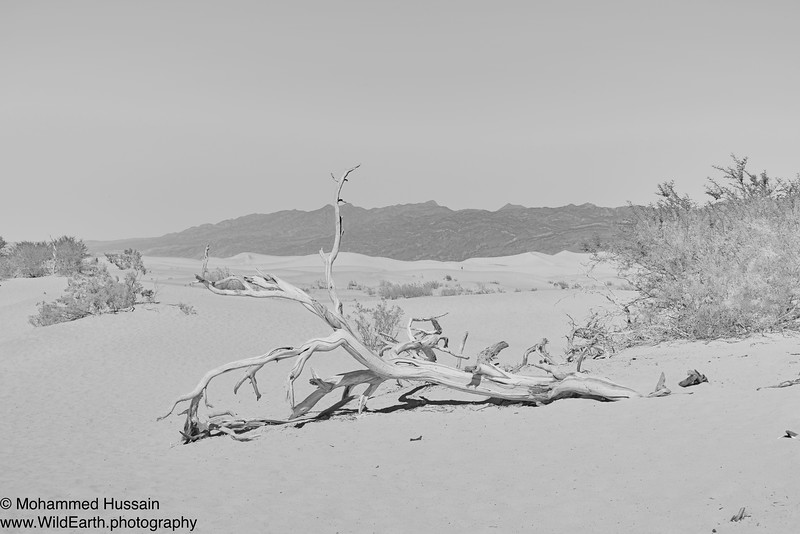 Mesquite Flat Sand Dunes - Death Valley National Park, CA