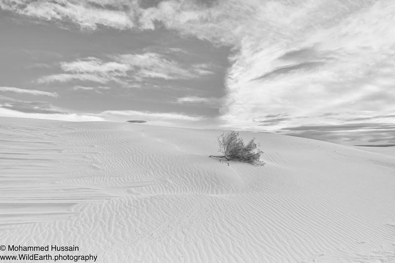 White Sands National Monument, Alamogordo, NM