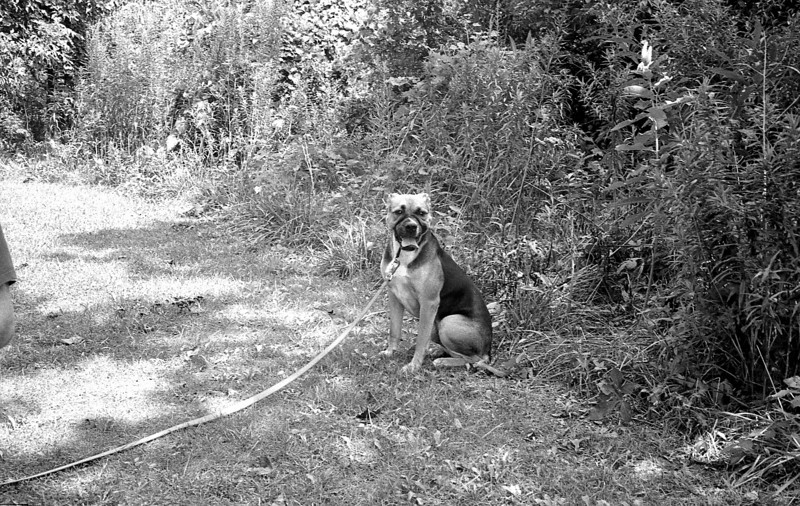My brothers coward of a dog.  Apparently he's terrified by the sight of large, full trash bags.<br /> <br /> Neopan 400 in DDX<br /> August 2010