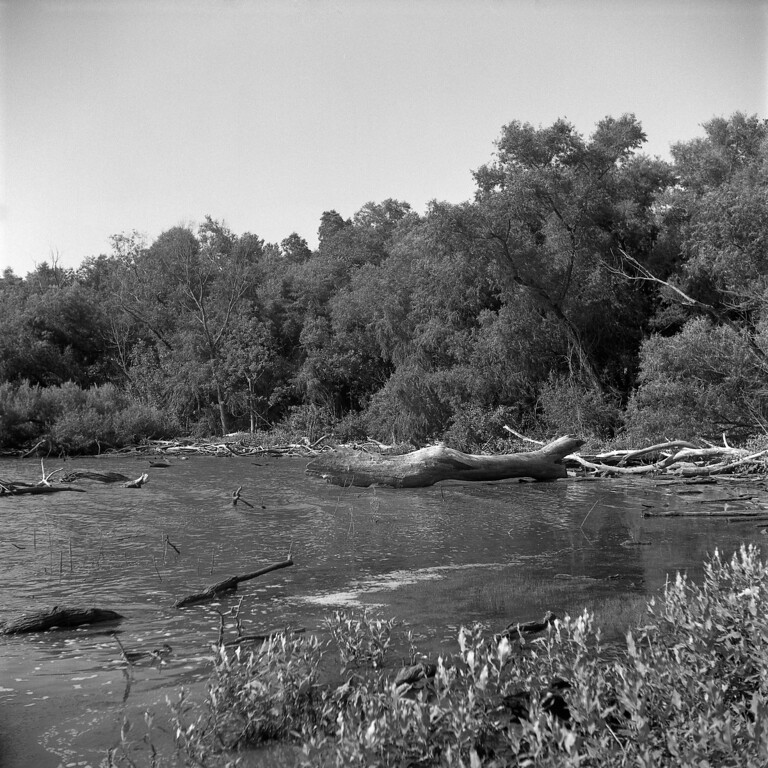 Shot on TMax 100, developed in F76+<br /> August 22, 2009