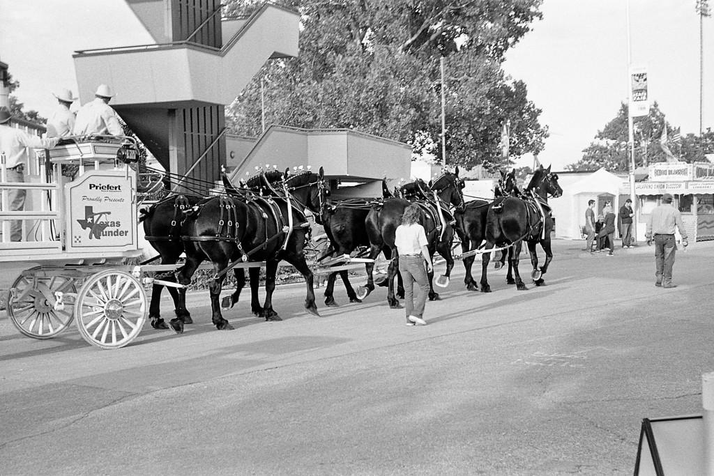 A few rather large horses.