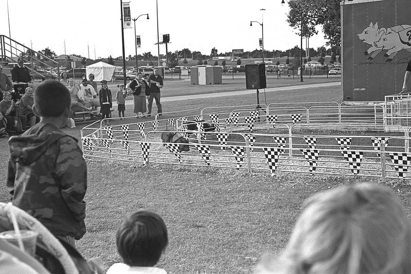 The races were extremely fast with a single lap around the track.  It wasn't as exciting as it looked.