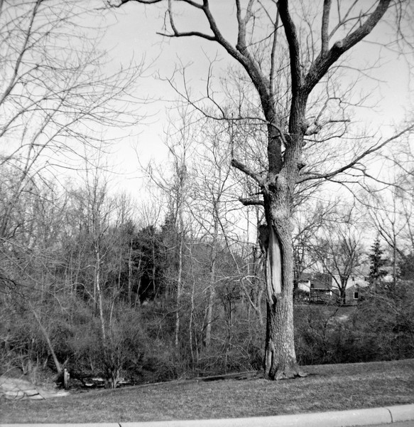 February 2011<br /> <br /> Neopan Acros at 80 ISO developed in Rodinal 1+50
