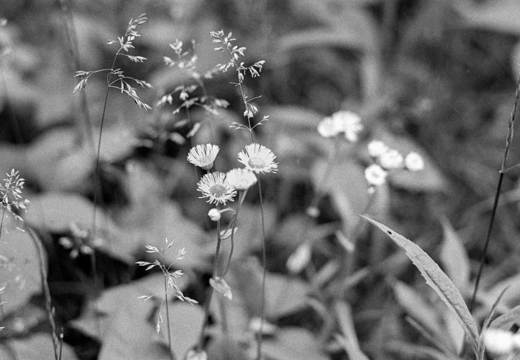 Taken with Mamiya ZE