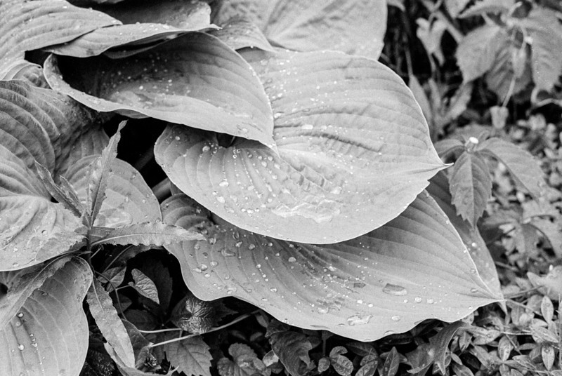 Recent Rain