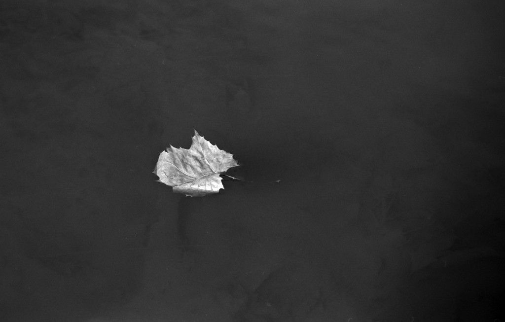 A fall leaf floating on the water.  Taken with the JC Penny lens.