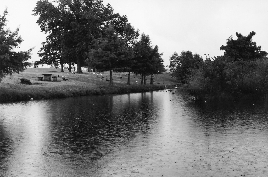 Photos taken at the University of Oklahoma Duck Pond.  All of these pictures were shot on Kodak T400CN
