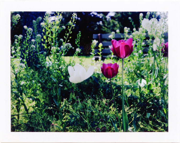 Spring flowers<br /> Cox Arboretum with my Polaroid 250