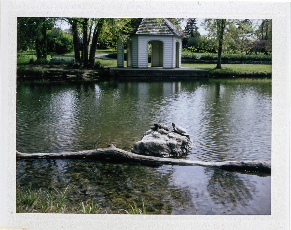 Turtles basking in the spring sun<br /> Cox Arboretum with my Polaroid 250
