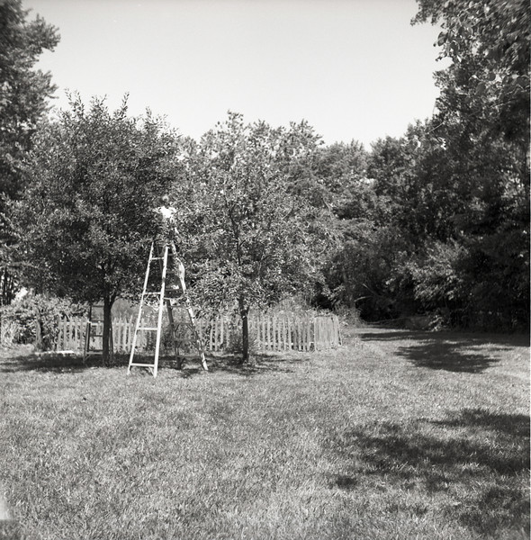 I took the camera along last week when my wife and I went cherry picking.  The cherry tree and the garden pictured in this set are owned by the family members who passed the camera on to me, so it seemed a fitting place to test it out.