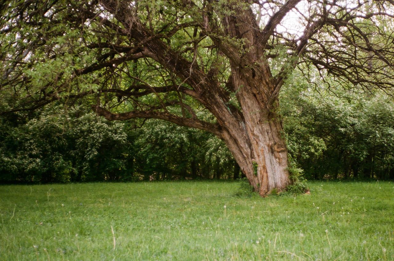 Wegerzyn Gardens<br /> 2015<br /> <br /> Kodak Porta 400
