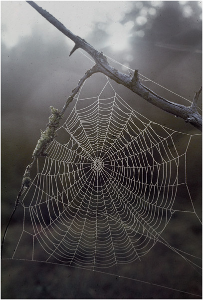 Adirondacks Forked Lake Spider Web 2 August 1976