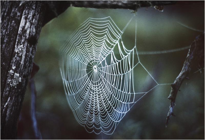 Adirondacks Forked Lake Spider Web 1 August 1975