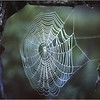 Adirondacks Forked Lake Spider Web 1 August 1975