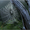 Adirondacks Forked Lake Spider Web 1 August 1976