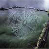 Adirondacks Forked Lake Spider Web 3 August 1980