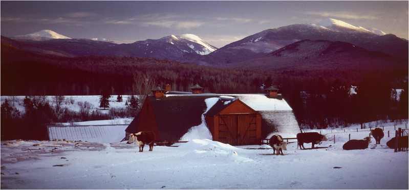 Adirondacks North Elba High Peaks Winter Farm Cows January 1977