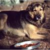 Adirondacks Forked Lake Bucky Food August 1979