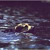 Adirondacks Forked Lake Buck Swimming August 1979