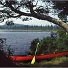 Adirondacks Forked Lake Birches Site Canoe and Paddle July 1993