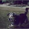 Adirondacks Forked Lake Bucky Water August 1979