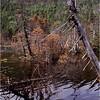 Adirondacks Lake Tear of the Clouds 2 July 1995