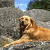 Adirondacks Mcki Resting on a Hike circa 1994