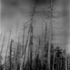 Smokey Mts Tennessee Appalachian Trail Forest 2 IR Film July 1996