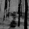 Cohoes NY Peebles Island Trees 1 IR Film May 1993