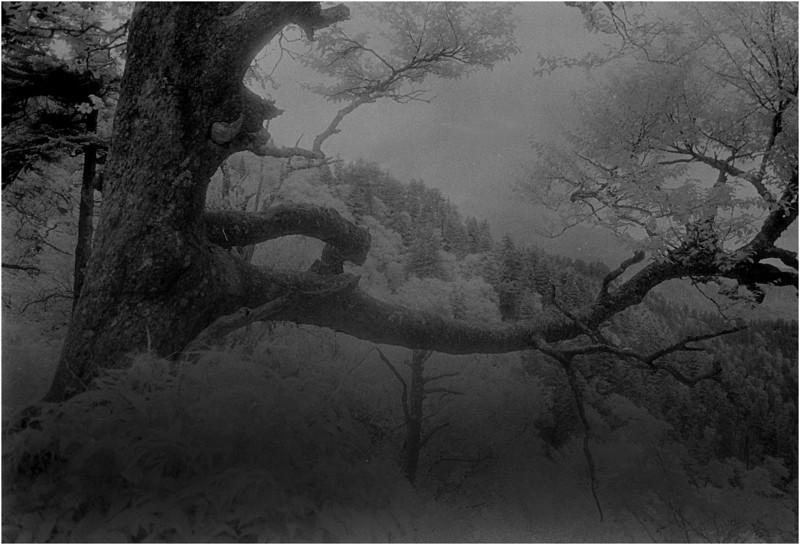 Smokey Mts Tennessee Appalachian Trail Forest 5 IR Film July 1996