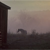 Saratoga NY Horses 2 October 1984
