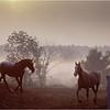 Saratoga NY Horses 1 October 1984