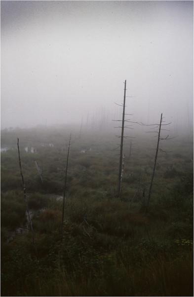 Adirondacks Long Lake Mist Shaw Pond  1 August 1997