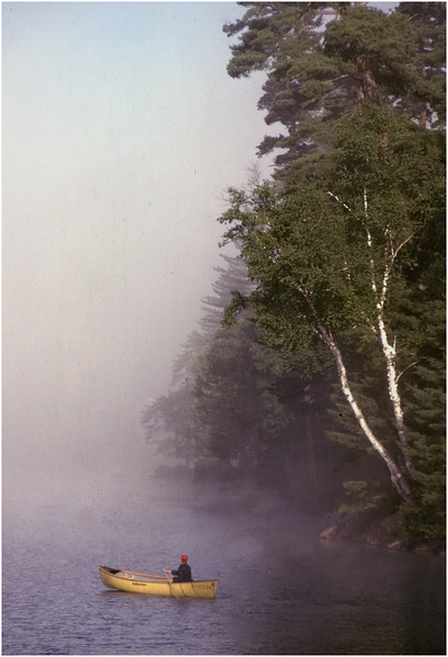 Adirondacks Forked Lake Morning Birches Jim Hinchcliff August 1983