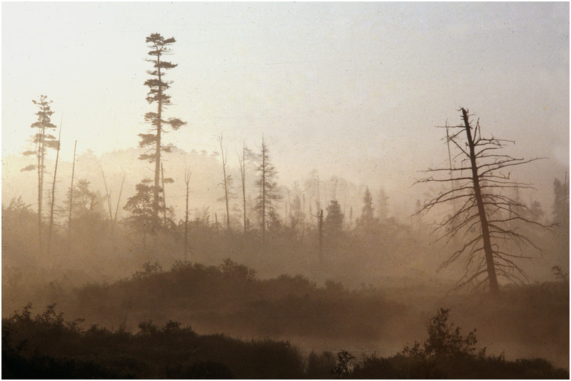 Adirondacks Forked Lake Morning Mist Brandreth Inlet 1 August 1979
