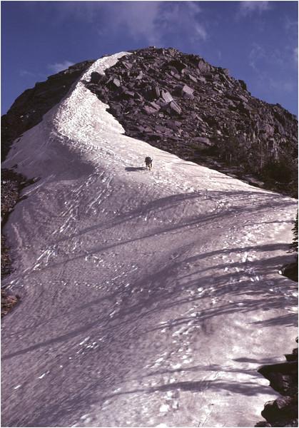 Glacier Park MT Sperry Glacier Mountain Goat 10 Gunsight Mt July 1980