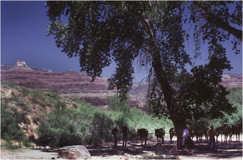 Grand Canyon AZ Bright Angel Trail 3 May 1980