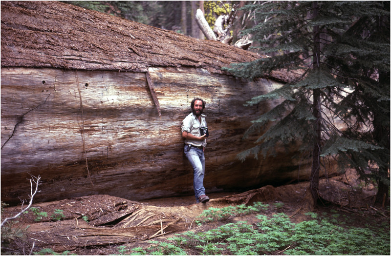 Sequoia NP CA Trees 3 Tom Bessette by G Womack June 1980