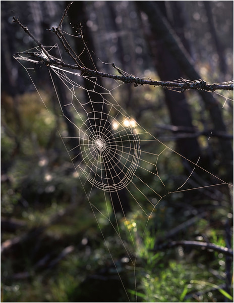 45 Adirondacks Forked Lake Spider Web 2 July 2001