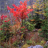 45 Indian Lake NY Roadside Foliage October 2000