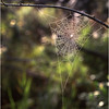 45 Adirondacks Forked Lake Spider Web 1 July 2001