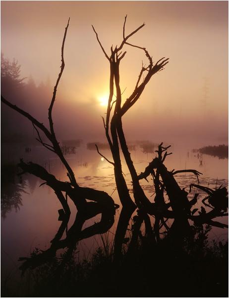 45 Adirondacks Lake Lila Sunrise 4 August 1997