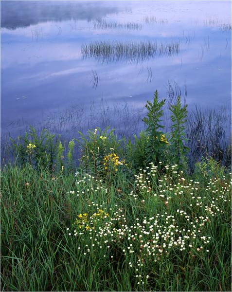 45 Adirondacks Little Tupper Lake Shoreline July 1995