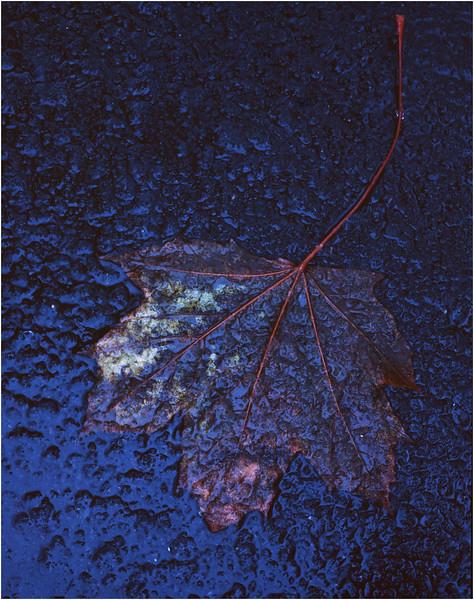 45 Delmar NY Driveway Leaf November 1995