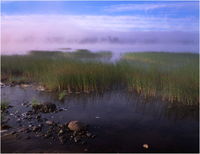 67 Adirondacks Lake Durant Reeds 3 August 2003