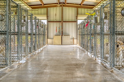 Spotless kennel for the Classic Lab family