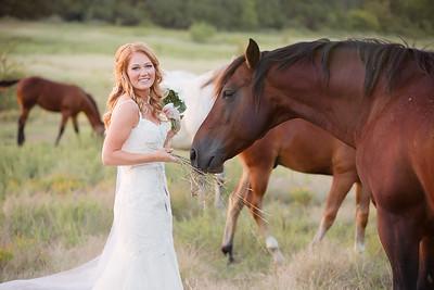 horsesandcamels030