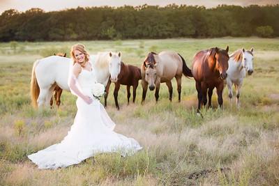 horsesandcamels025