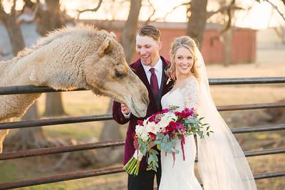 horsesandcamels019